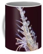 Tukophrya Cyclopum Coffee Mug