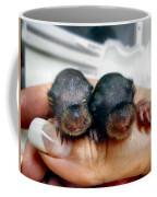 Twin Baby Squirrels Coffee Mug