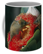 Two Australian Honey Possums Feed Coffee Mug