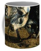 Two  Bulls Locking Heads In The Omani Coffee Mug