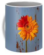 Two Color Gerbera Daisy Coffee Mug