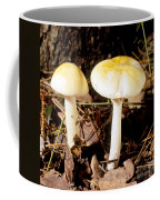Two Death Cap Mushrooms Coffee Mug