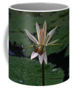 Two Frogs Sharing A Lotus Coffee Mug