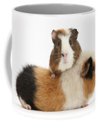 Two Guinea Pigs Coffee Mug