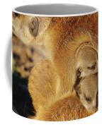 Two Meerkat Pups Sleep Under The Arm Coffee Mug