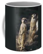 Two Meerkats, Suricata Suricatta, Stand Coffee Mug
