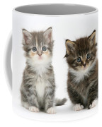 Two Tabby Kittens Coffee Mug