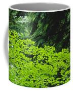 Umbrella Of Trees In Forest Coffee Mug