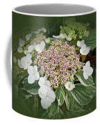 Variegated Lace Cap Hydrangea - Pink And White Coffee Mug
