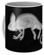 Veiled Chameleon X-ray Coffee Mug by Ted Kinsman