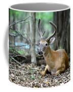 Velvet Buck At Rest  Coffee Mug