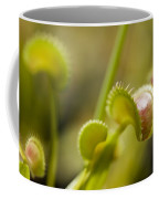 Venus Flytraps As They Consume Insects Coffee Mug by Joel Sartore