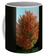 Vibrant Sugar Maple Coffee Mug