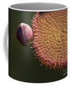 Victoria Amazonica Budding Coffee Mug