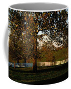 View Of A Large Sycamore Tree And White Coffee Mug