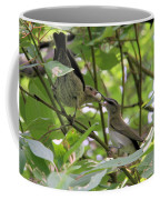 Vireo And Cowbird Coffee Mug