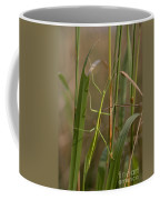 Walking Stick Insect Coffee Mug by Ted Kinsman