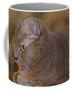 Warm Kitty  Coffee Mug