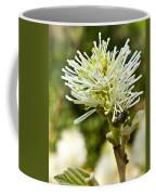 Wasp On Fothergilla 1 Coffee Mug