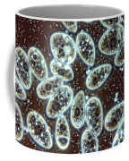 Water From A Flower Vase Coffee Mug