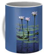 Water Lily Flowers Bloom From A Wetland Coffee Mug