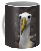 Waved Albatross Portrait Coffee Mug