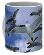 Western Gull Larus Occidentalis Flock Coffee Mug by Michael Durham/ Minden Pictures