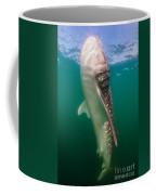 Whale Shark, La Paz, Mexico Coffee Mug
