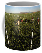 Wheat And Elevated Carbon Dioxide Coffee Mug by Science Source