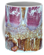 Wheat Rust Puccinia Graminis Coffee Mug