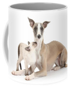 Whippet And Siamese Kitten Coffee Mug