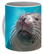Whiskers Of A Seal Coffee Mug