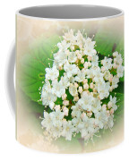 White And Cream Hydrangea Blossoms Coffee Mug