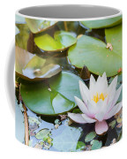 White And Pink Water Lily Coffee Mug