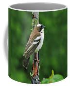 White-browed Sparrow-weaver Coffee Mug