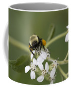 White Crownbeard Wildflowers Pollinated By A Bumble Bee With His Bags Packed Coffee Mug
