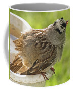 White Crowned Sparrow Sends A Warning Coffee Mug