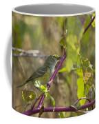 White-eyed Vireo - 1508 Coffee Mug