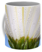 White Flower Head With Dew Coffee Mug
