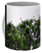 White Ibises Roosting Coffee Mug