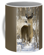 White-tailed Deer In A Snow-covered Coffee Mug