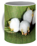 White Tent-making Bats Coffee Mug