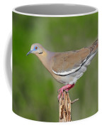 White Winged Dove Coffee Mug