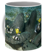 Whole Family Of Clownfish In Dark Grey Coffee Mug by Mathieu Meur