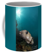 Wide-angle Image Of Pufferfish, Raja Coffee Mug