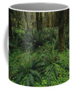 Woodland Rain Forest View With Mosses Coffee Mug by Melissa Farlow