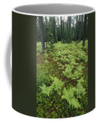 Woodland View In A Pine Forest Coffee Mug