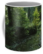 Woodland View With Stream Coffee Mug