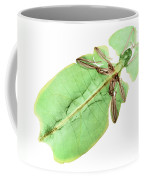 X-ray Of A Giant Leaf Insect Coffee Mug