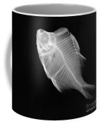 X-ray Of A Humphead Glassfish Coffee Mug